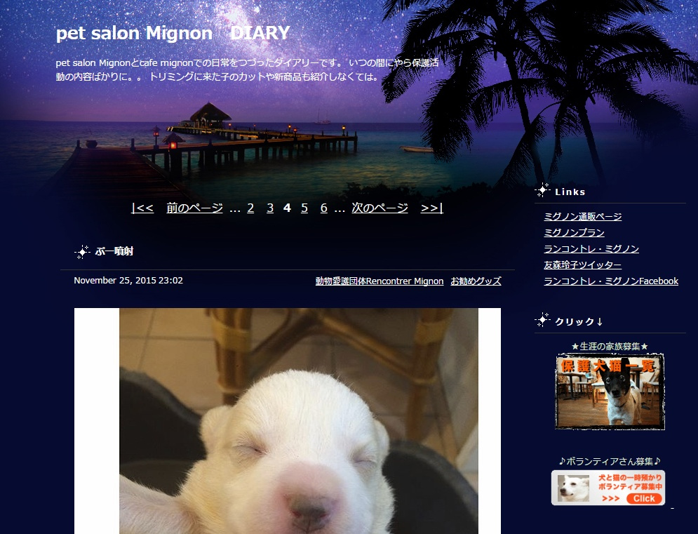 pet-salon-Mignon-DIARY
